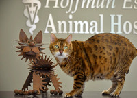 Hoffman Estates Animal Hospital